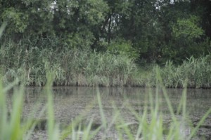 Emese Apai Parcul Între Lacuri 2